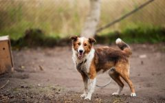 5 Reasons to Adopt a Shelter Dog